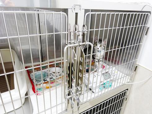 入院室(猫)